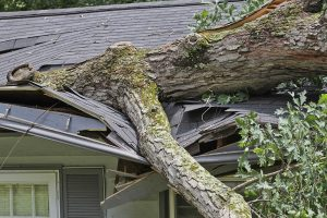 fallen tree, homeowners insurance omaha